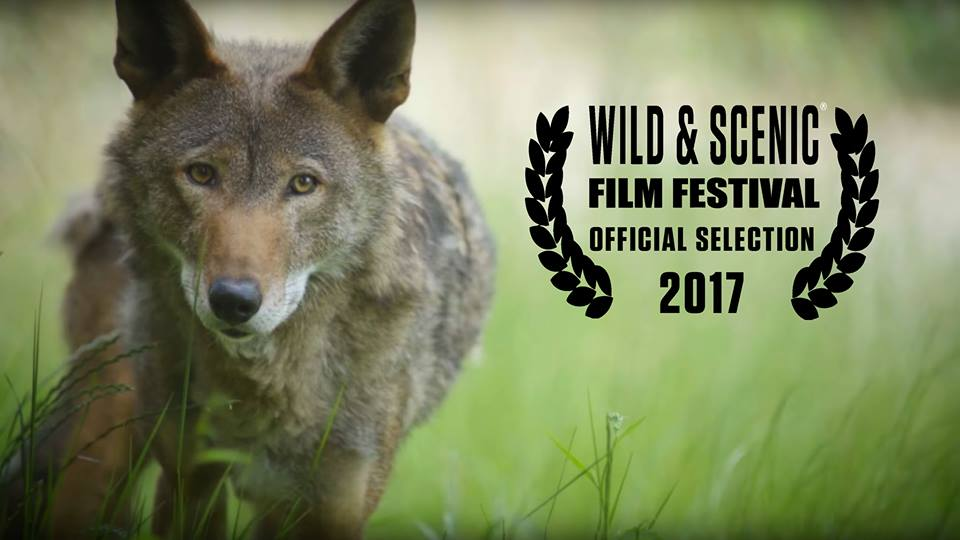 movie poster of Red Wolf Revival